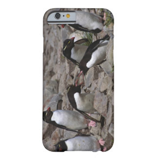 Atlantic Ocean, Falkland Islands. Rockhopper 2 Barely There iPhone 6 Case