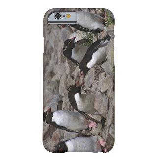 Atlantic Ocean, Falkland Islands. Rockhopper 2 Barely There iPhone 6 Case