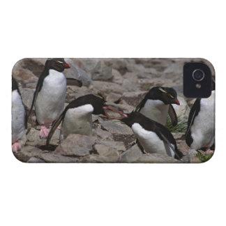Atlantic Ocean, Falkland Islands. Rockhopper 2 iPhone 4 Cover