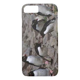 Atlantic Ocean, Falkland Islands. Rockhopper 2 iPhone 7 Case