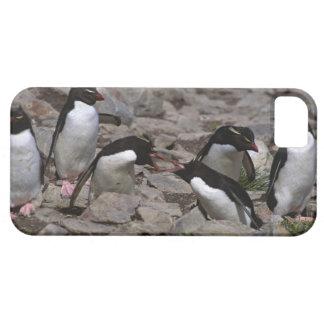 Atlantic Ocean, Falkland Islands. Rockhopper 2 iPhone SE/5/5s Case