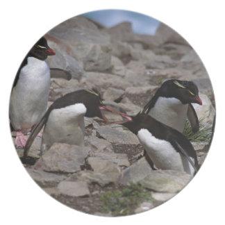 Atlantic Ocean, Falkland Islands. Rockhopper 2 Melamine Plate