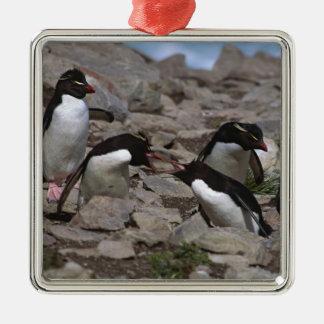 Atlantic Ocean, Falkland Islands. Rockhopper 2 Metal Ornament