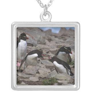 Atlantic Ocean, Falkland Islands. Rockhopper 2 Square Pendant Necklace