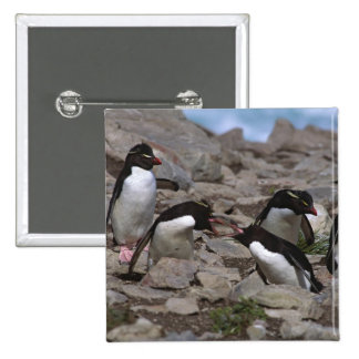 Atlantic Ocean, Falkland Islands. Rockhopper 2 Pinback Button