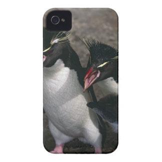 Atlantic Ocean, Falkland Islands. Rockhopper Case-Mate iPhone 4 Case