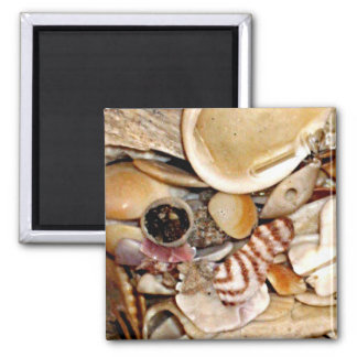 Atlantic Ocean Sea Shell Collection 2 Inch Square Magnet