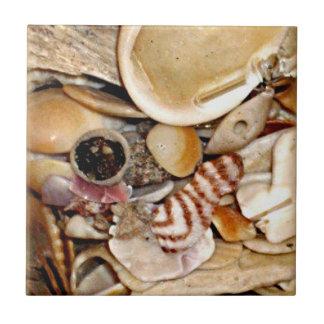 Atlantic Ocean Sea Shell Collection Small Square Tile