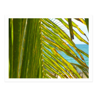 Atlantic Ocean Through Palm Fronds Postcard