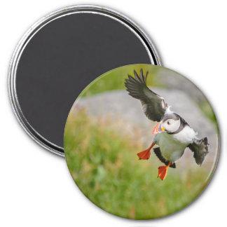 Atlantic Puffin bird flying round magnet