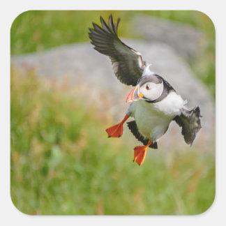 Atlantic Puffin bird flying sticker