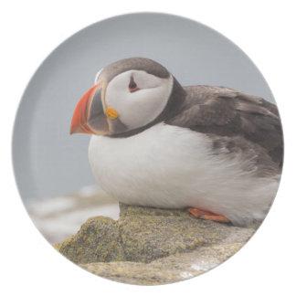 Atlantic Puffin bird plate