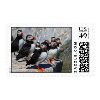Atlantic Puffin Colony Postage Stamp