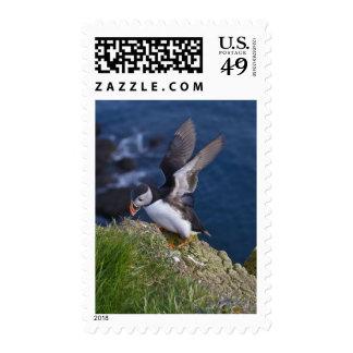 Atlantic Puffin Fratercula arctica 2 Postage