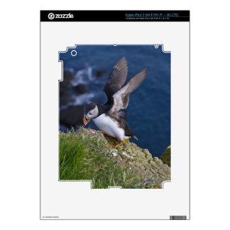Atlantic Puffin (Fratercula arctica) 2 iPad 3 Skin