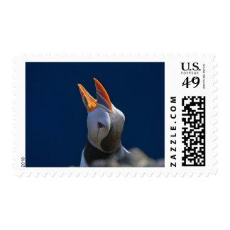 Atlantic Puffin Fratercula arctica 3 Stamps