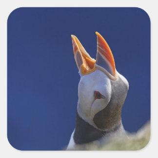 Atlantic Puffin (Fratercula arctica) 4 Square Sticker