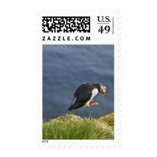 Atlantic Puffin Fratercula arctica 5 Postage Stamps