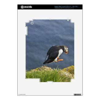 Atlantic Puffin (Fratercula arctica) 5 iPad 3 Skin