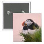 Atlantic Puffin (Fratercula arctica) 6 2 Inch Square Button