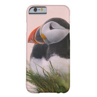 Atlantic Puffin (Fratercula arctica) 6 Barely There iPhone 6 Case