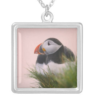 Atlantic Puffin (Fratercula arctica) 6 Silver Plated Necklace