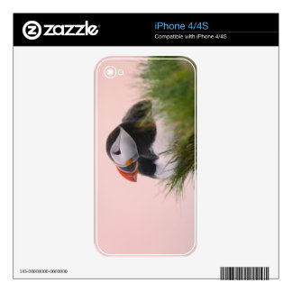 Atlantic Puffin (Fratercula arctica) 6 Decals For The iPhone 4S