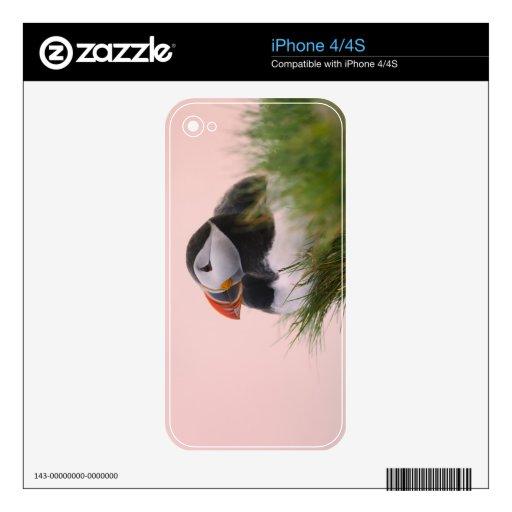 Atlantic Puffin (Fratercula arctica) 6 iPhone 4S Skin