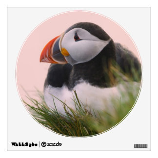 Atlantic Puffin (Fratercula arctica) 6 Wall Skins