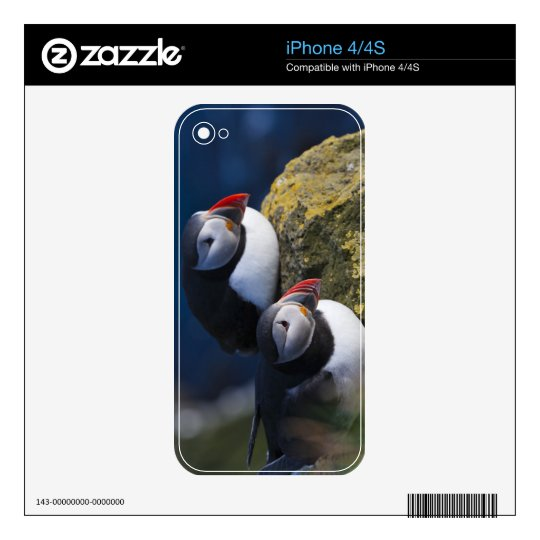 Atlantic Puffin (Fratercula arctica) 7 Decals For The iPhone 4S