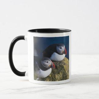 Atlantic Puffin (Fratercula arctica) 7 Mug