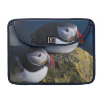 Atlantic Puffin (Fratercula arctica) 7 Sleeve For MacBooks