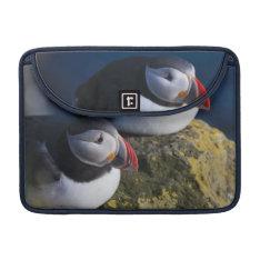Atlantic Puffin (Fratercula arctica) 7 Sleeve For MacBooks at Zazzle