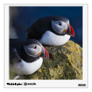 Atlantic Puffin (Fratercula arctica) 7 Room Stickers