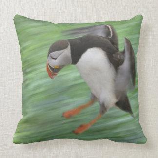 Atlantic Puffin (Fratercula arctica) flying Throw Pillow