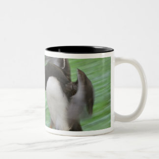 Atlantic Puffin (Fratercula arctica) flying Two-Tone Coffee Mug