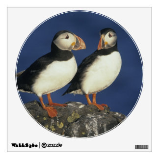 Atlantic Puffin, Fratercula arctica), in Wall Sticker
