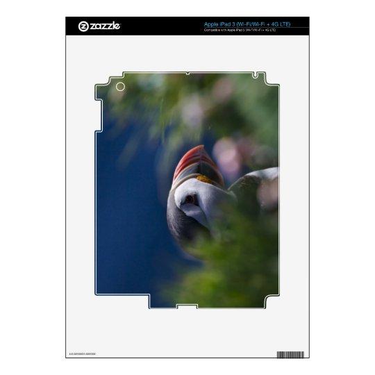 Atlantic Puffin (Fratercula arctica) iPad 3 Decals