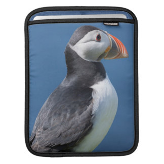 Atlantic Puffin (Fratercula Arctica) On Cliff Sleeve For iPads