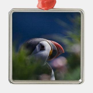 Atlantic Puffin (Fratercula arctica) Square Metal Christmas Ornament