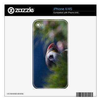 Atlantic Puffin (Fratercula arctica) Skin For iPhone 4S
