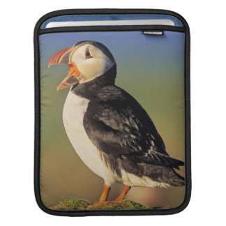 Atlantic Puffin (Fratercula Arctica) Sleeve For iPads