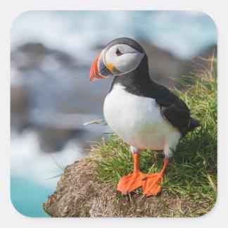 Atlantic Puffin Fratercula Arctica Square Sticker