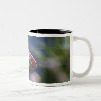 Atlantic Puffin (Fratercula arctica) Two-Tone Coffee Mug