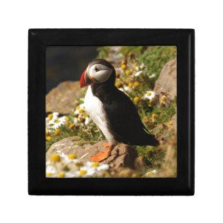 Atlantic Puffin Jewelry Box