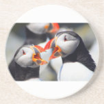 Atlantic Puffin mouths Drink Coasters