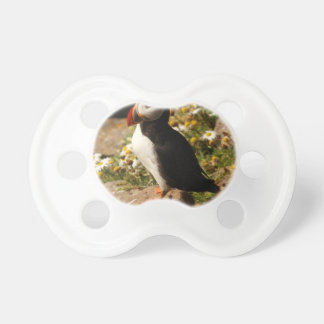 Atlantic Puffin Pacifier
