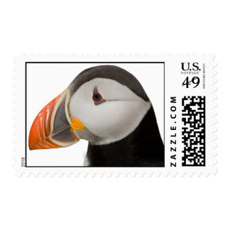 Atlantic Puffin Postage Stamp