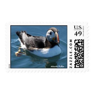 Atlantic Puffin Stamp