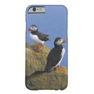 Atlantic Puffins (Fratercula arctica) on cliff iPhone 6 Case